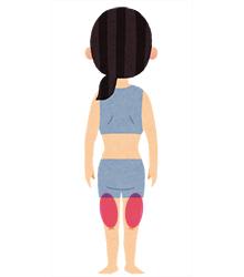 ここを意識しよう ふくらはぎ、太腿の後ろ側の筋肉(ハムストリングス)