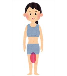 ここを意識しよう 太腿の内側の筋肉(内転筋)