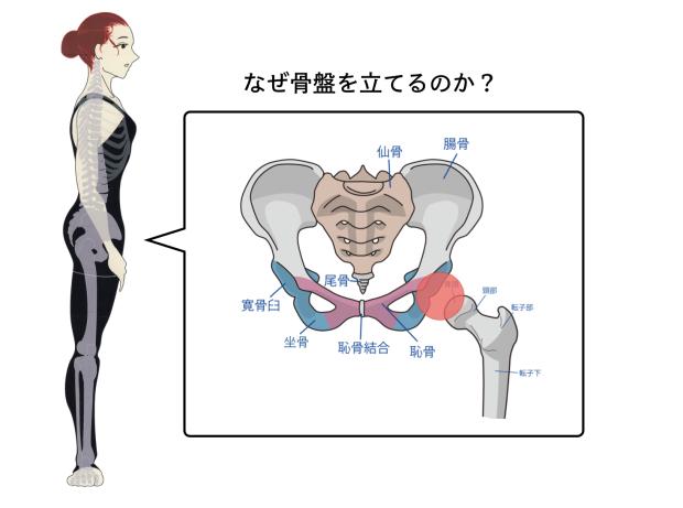 バレエで骨盤を立てる理由。メリットと立てる位置