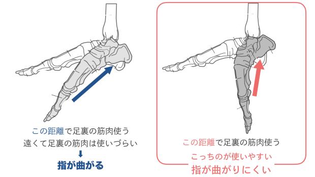 足首の角度で足裏が使いやすくなる